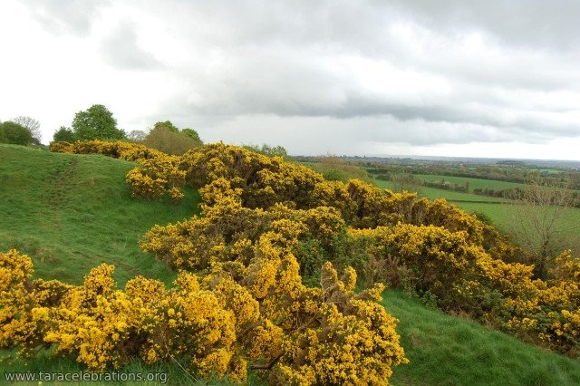 gorse sloping trenches